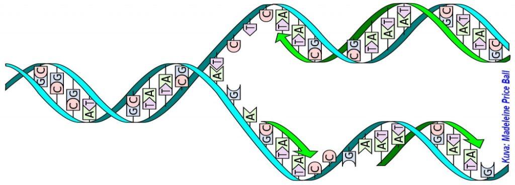 Geneettinen sukututkimus -luento