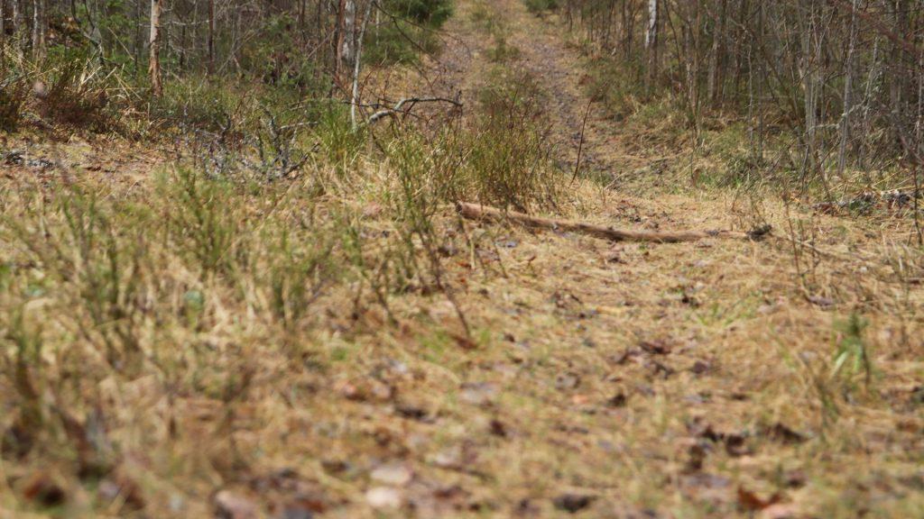 Polkulenkki: Härkävuori 28.6.2021